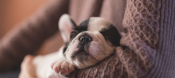 Hvad koster en ny hundehvalp? Få svar hos MiniFinans